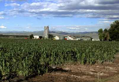 http://www.public-domain-image.com/free-images/nature-landscapes/field/corn-field-in-colorado-725x498.jpg